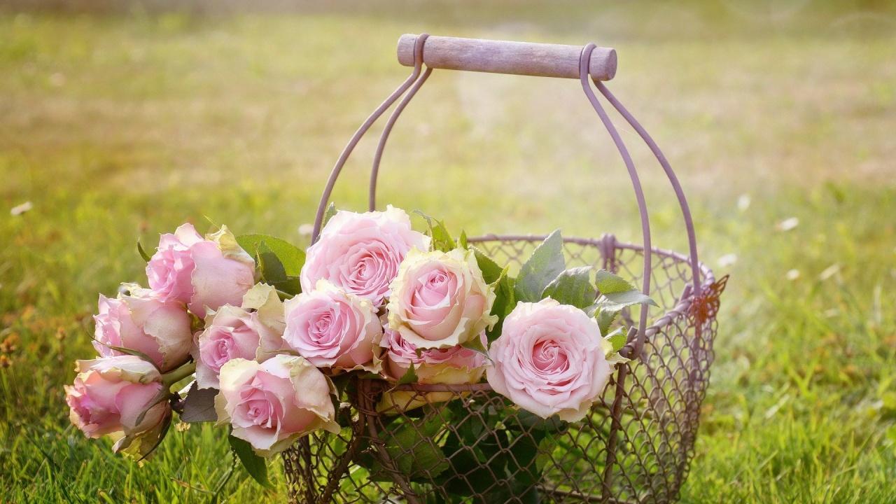 От 2 август ДФЗ приема заявления по de minimis за преработка на розов цвят