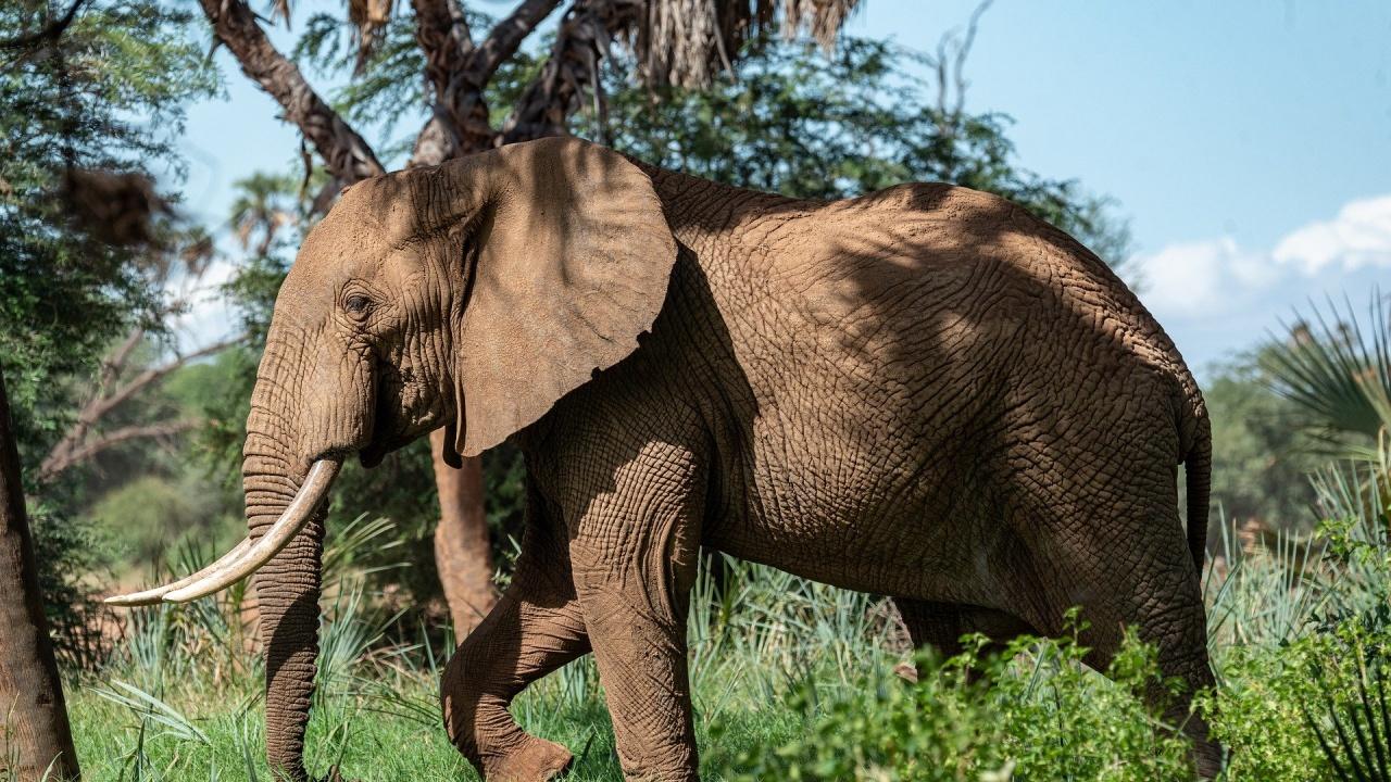 Природен парк във Флорида приютява циркови слонове