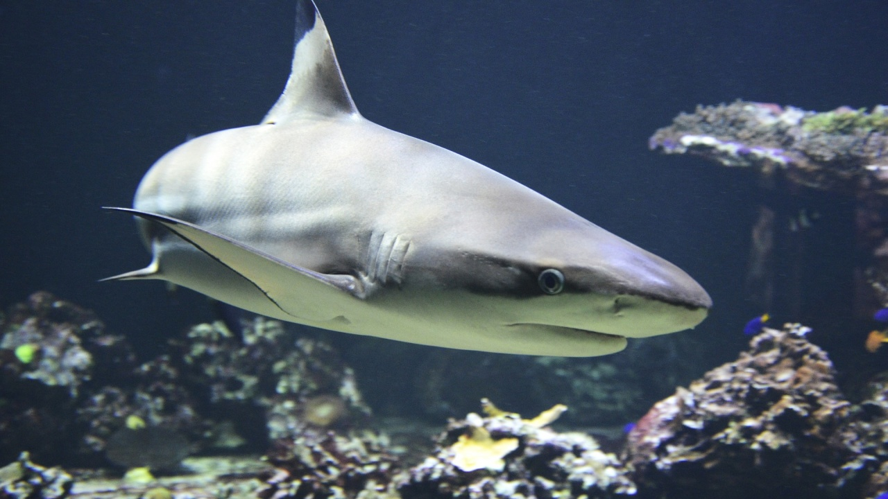 Акулите имат естествен джипиес, ориентират се по магнитното поле на Земята