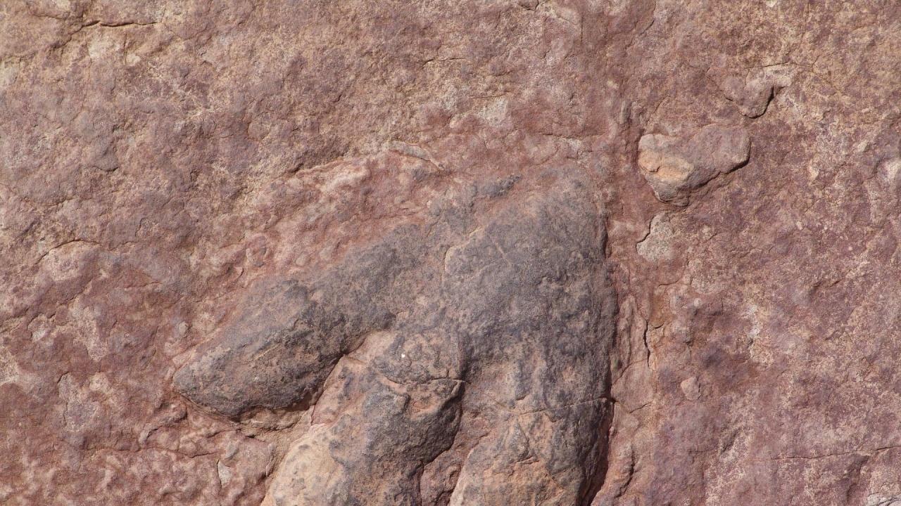 Откриха динозавър от непознат досега вид