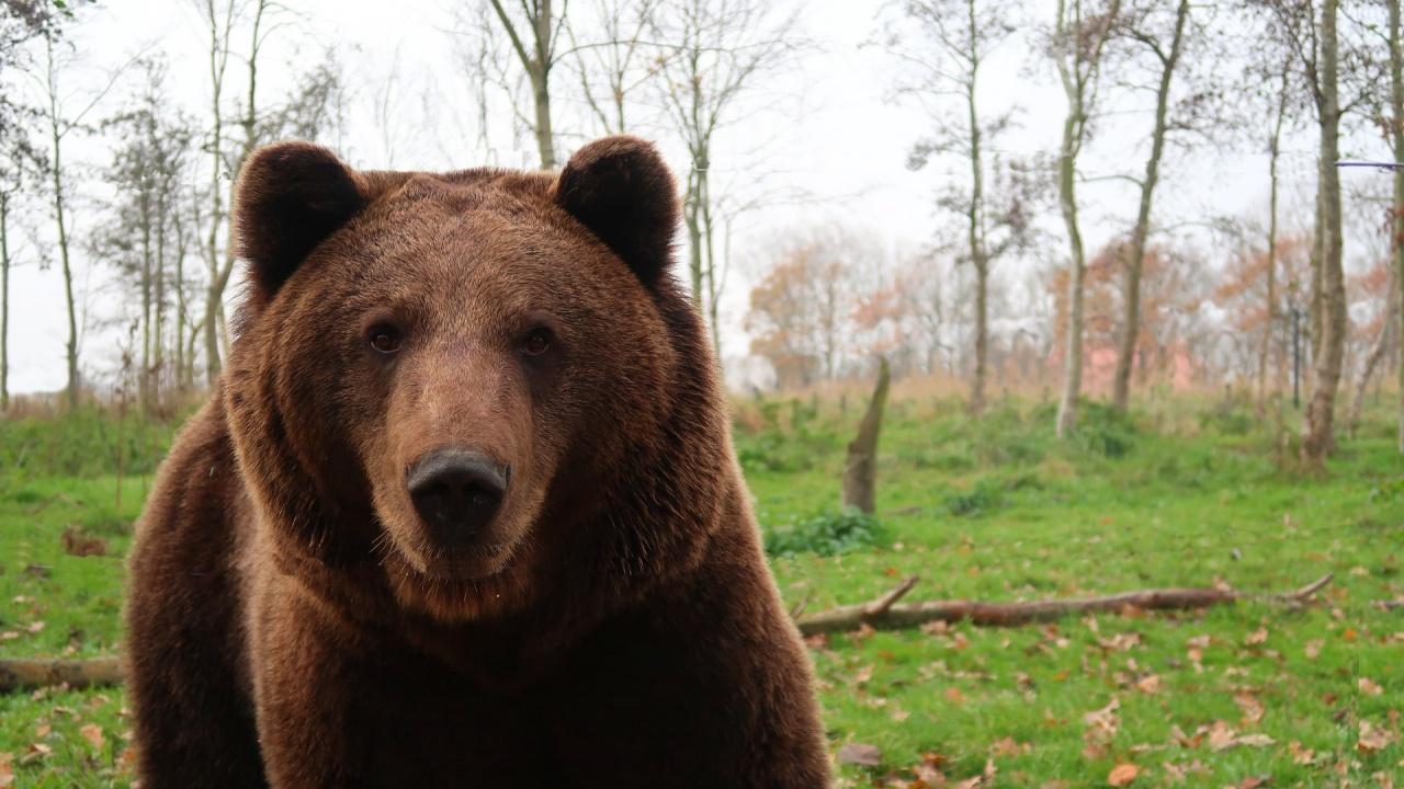 Румъния променя правилата за лов след скандала с убития от принц мечок