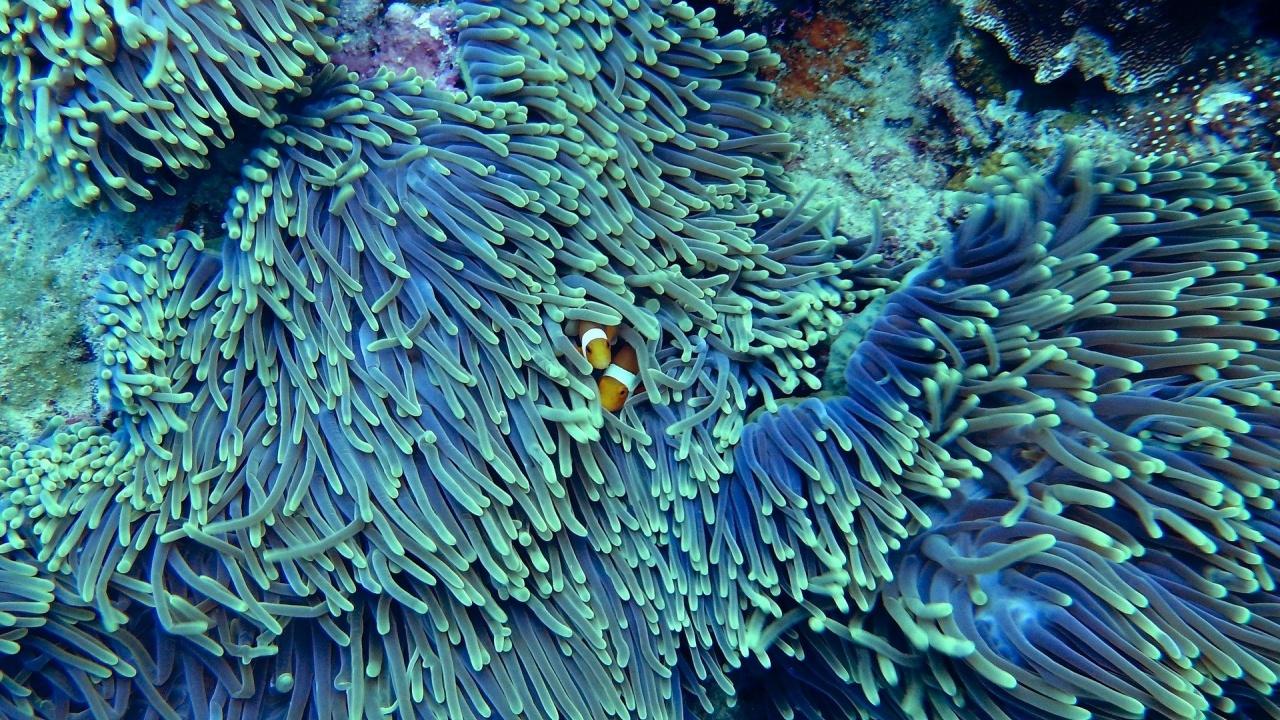 Над 90% от кораловите рифове ще загинат до 2050 година