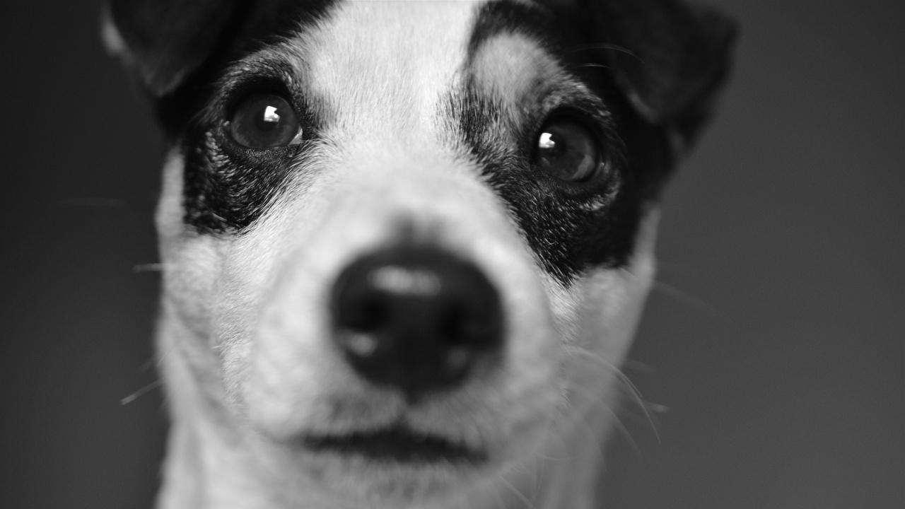 Териер нахапа друго куче в София