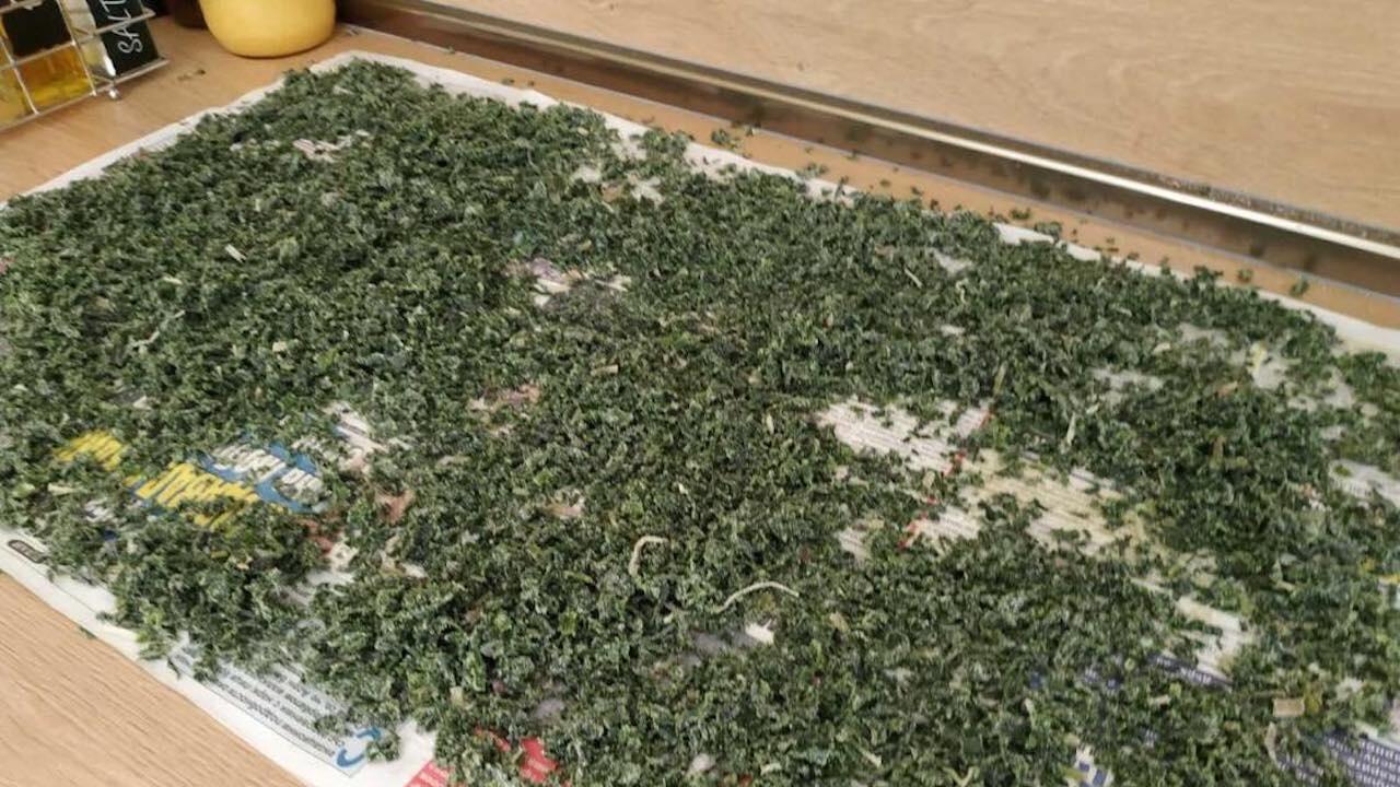Разкриха оранжерия за марихуана във Варна