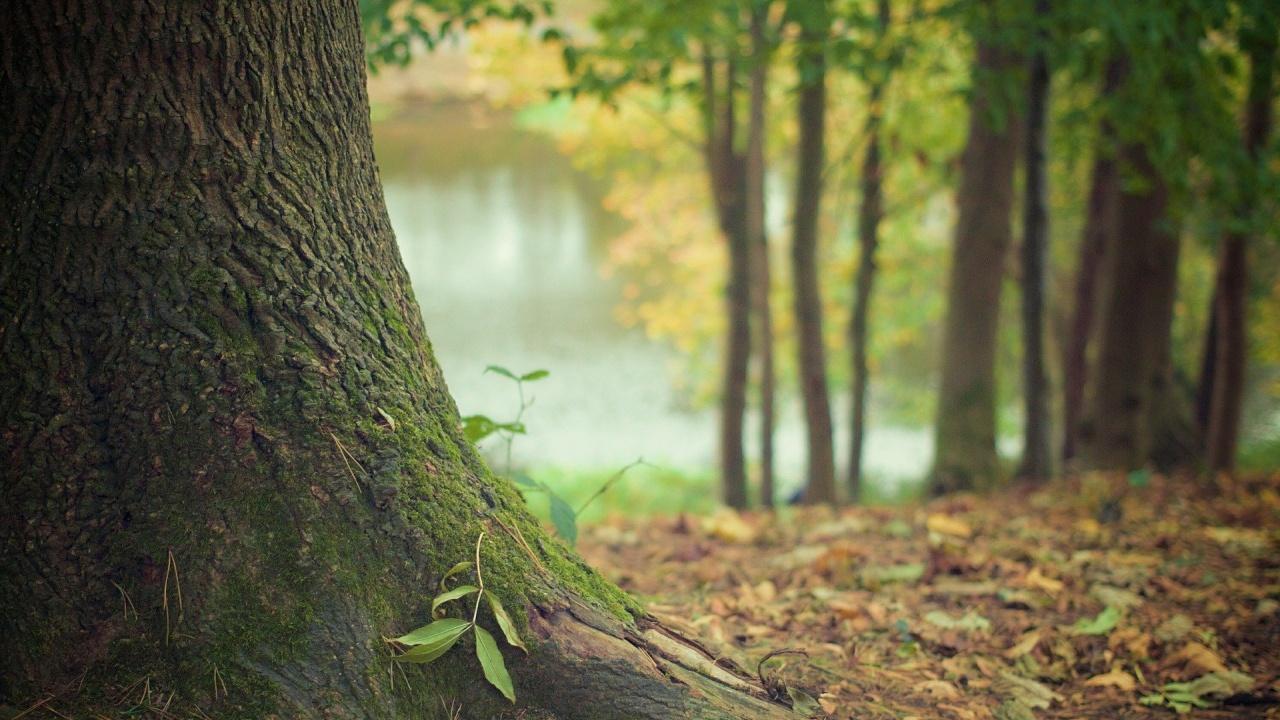 Залесяват нови 10 дка гора  край Шумен