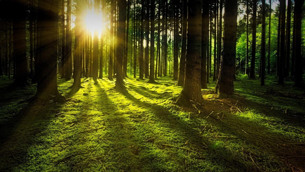 Започва възстановяване на горите на Североизтока