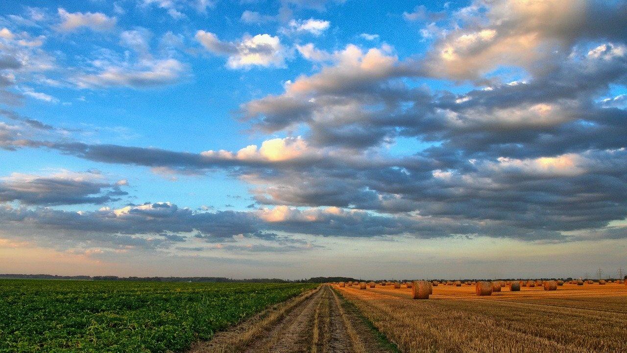 Земеделски стопани, засегнати от Covid-19, могат да получат до 7000 евро подкрепа