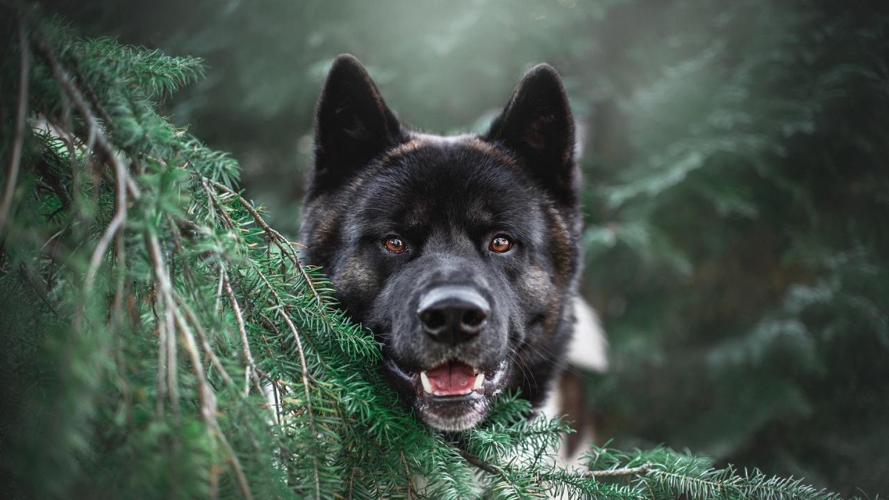 Учени доказаха, че кучетата са способни да откриват COVID-19