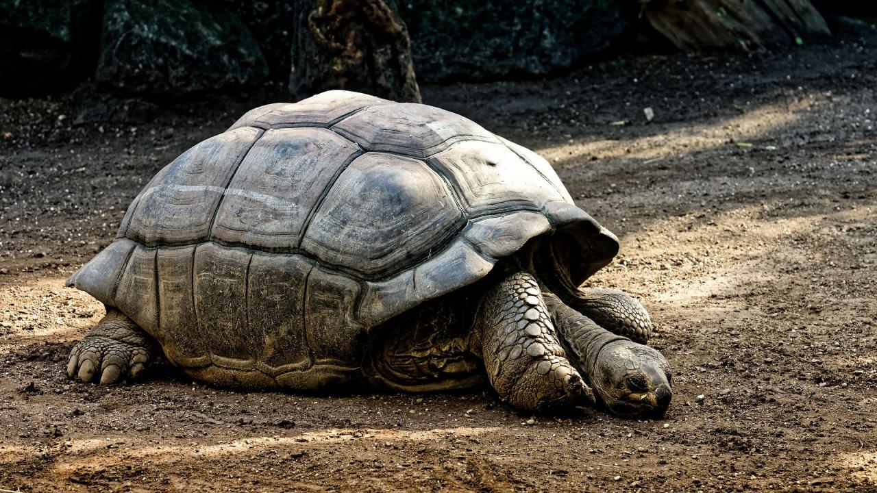 Петдесет и пет килограмова костенурка е новият обитател на зоопарка в Бургас