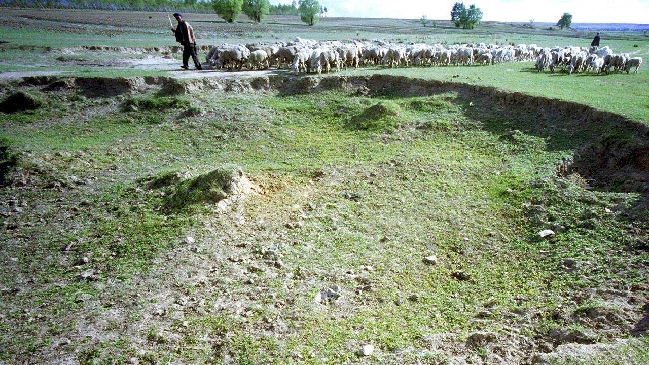 Снаряд уби стадо овце в Гърция