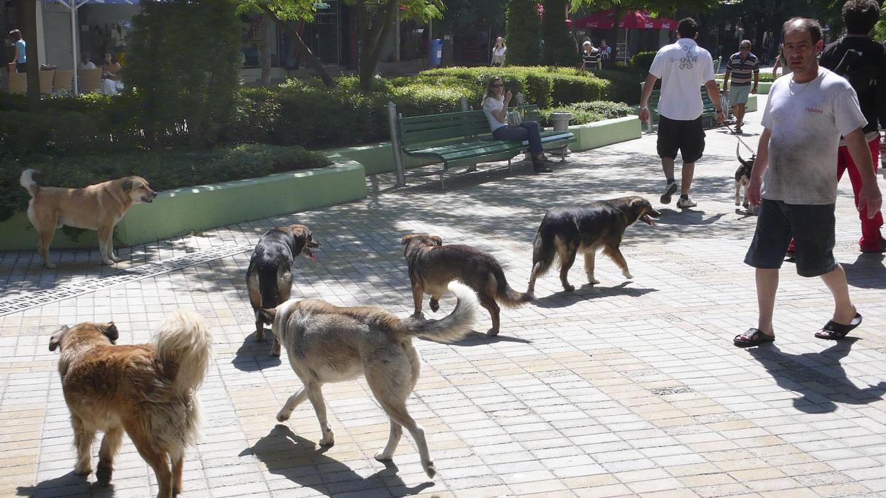 БАБХ глобява общини заради безстопанствените кучета