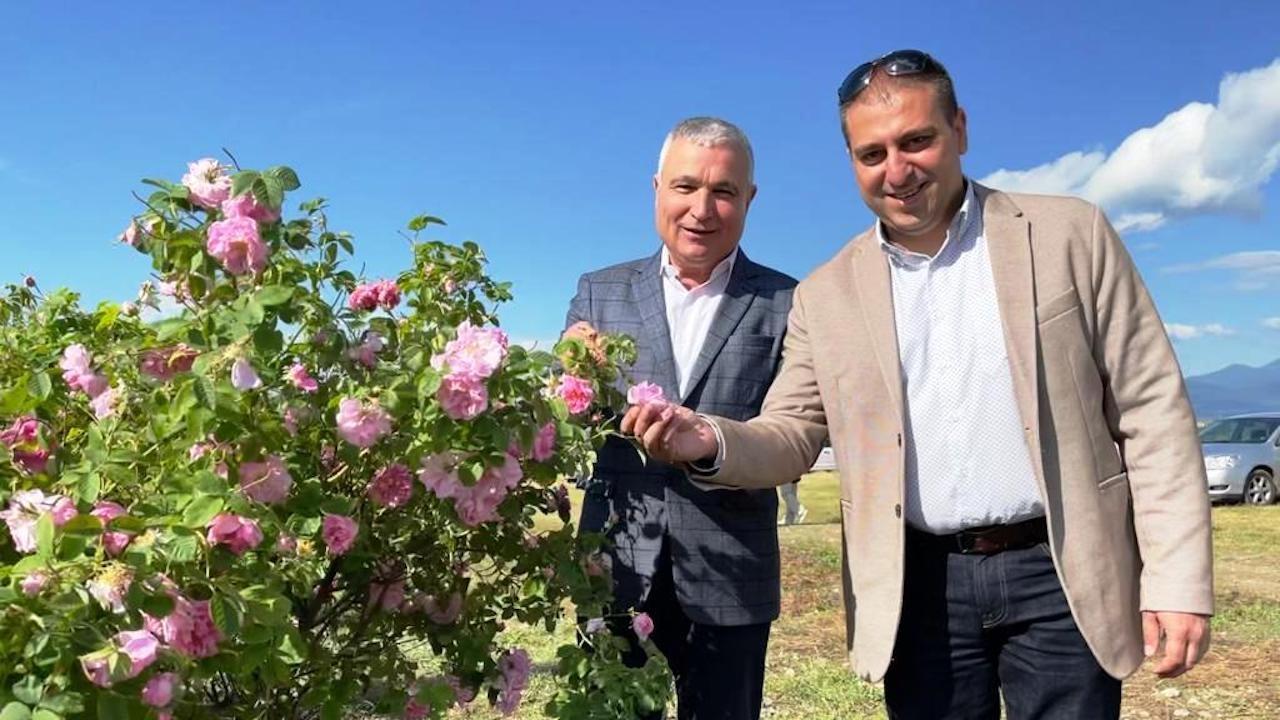 Заместник-министър Неделков: Работим по варианти за подкрепа на розопроизводителите