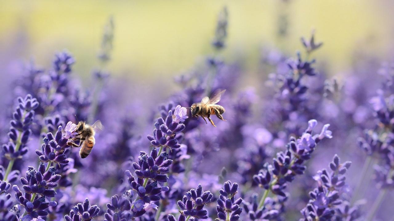 Пчелар призова земеделските производители да са по-внимателни с пестицидите