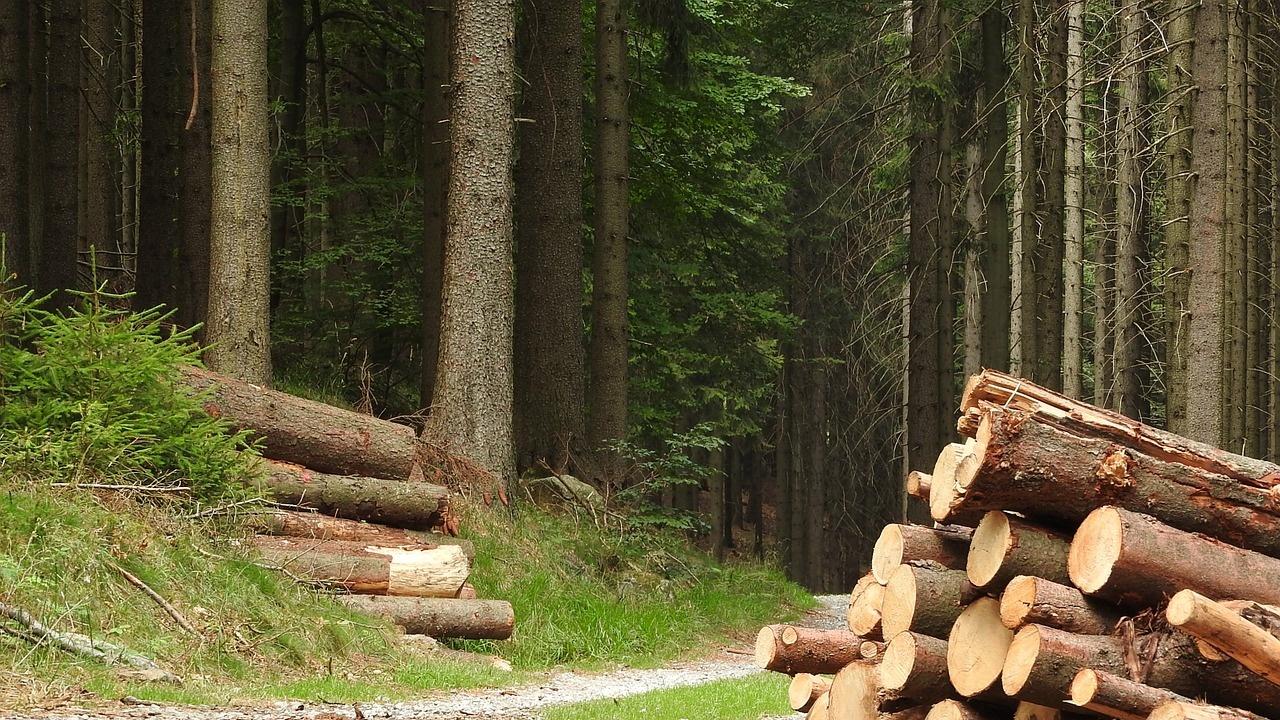 Спират сечта в държавните гори до края на годината