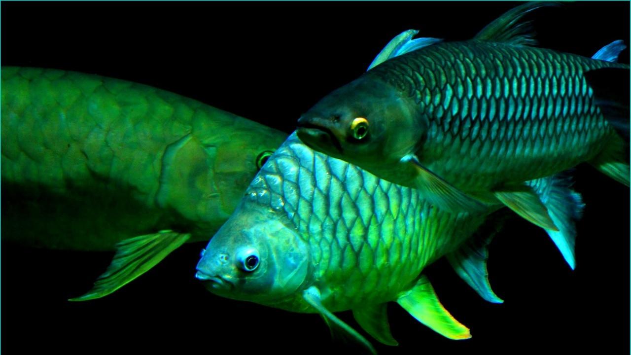 Учени използват рибни люспи за възстановяване на кости