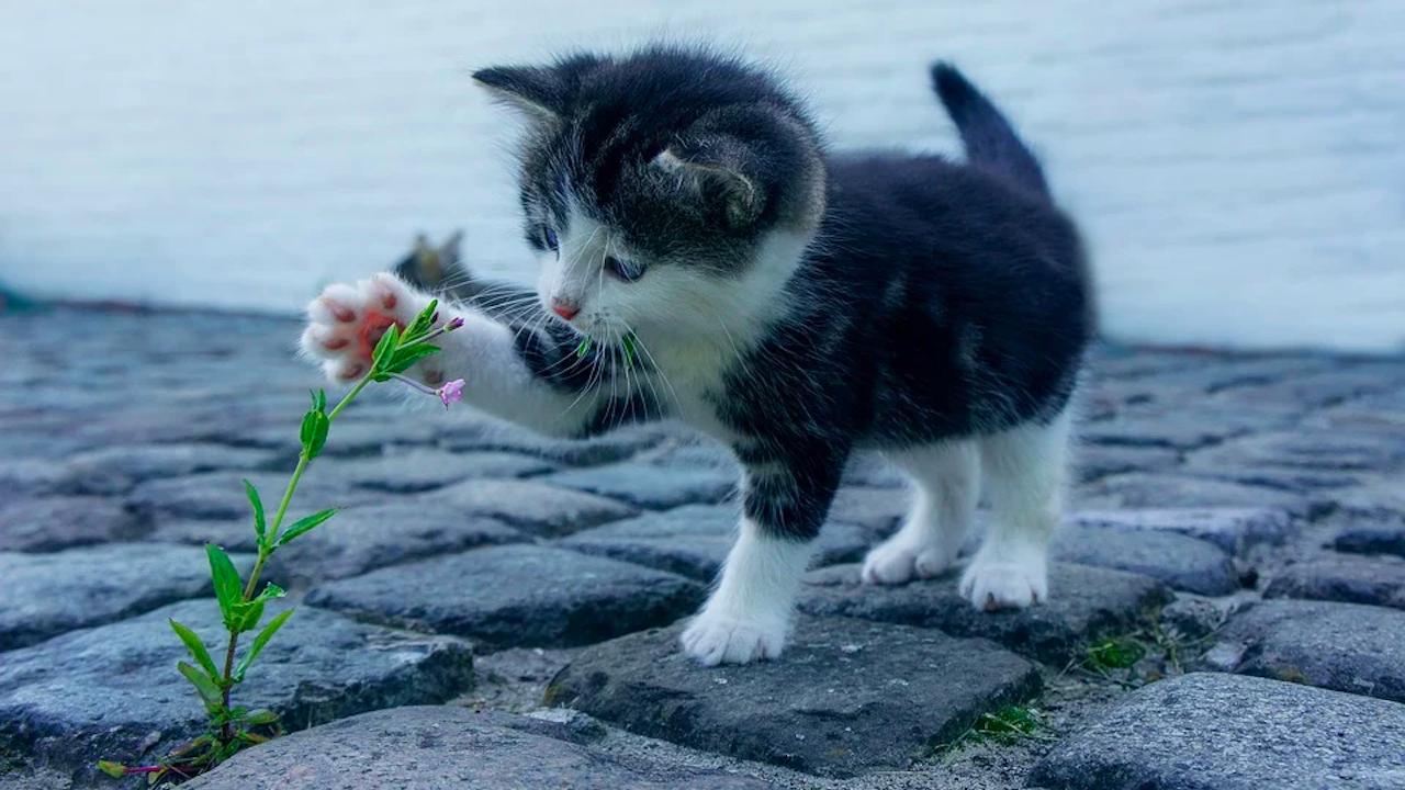 Учени изясняват има ли сред котките десничари и левичари