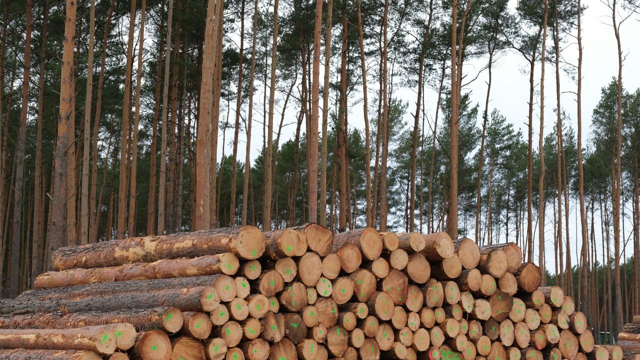 Уволниха шефа на най-голямото горско предприятие в страната