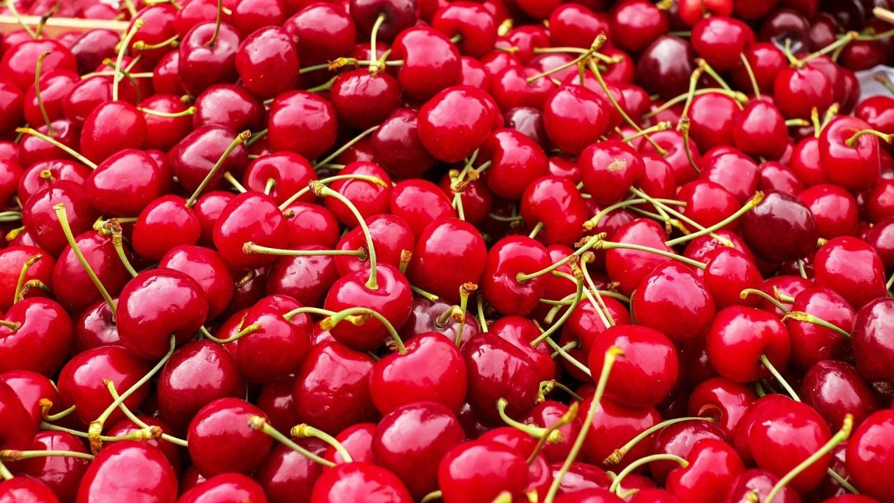 Пунктове за изкупуване на череши ще има в 23 села в Кюстендилско