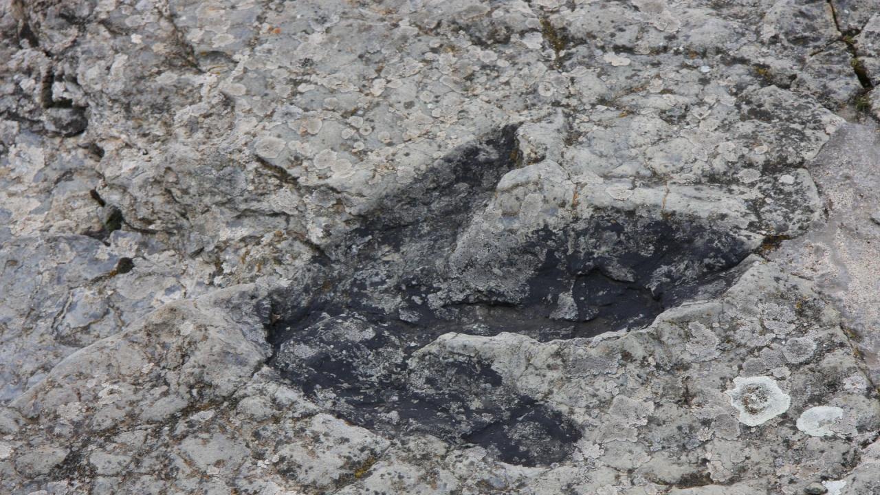 В Австралия откриха нов вид динозавър