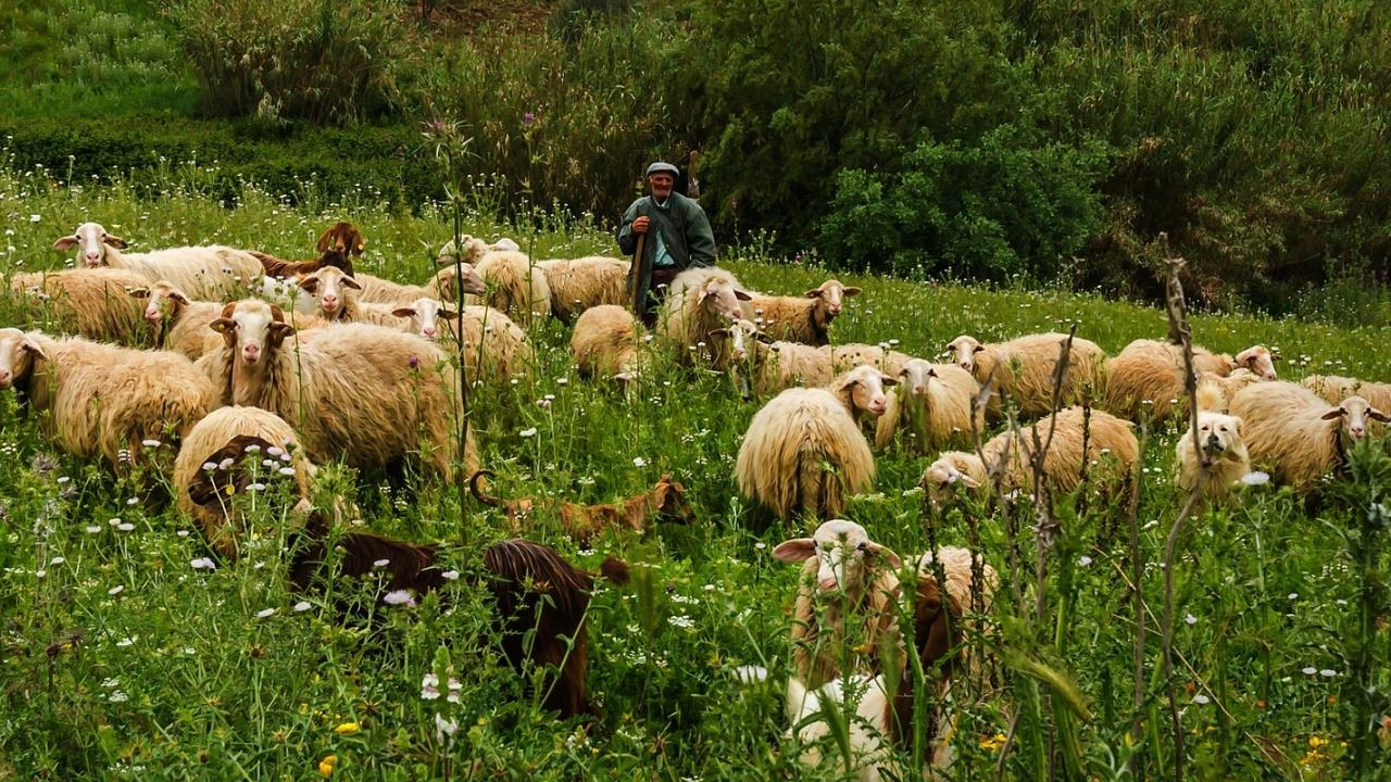Кюстендилско: Конфликт между пастири завърши в болница