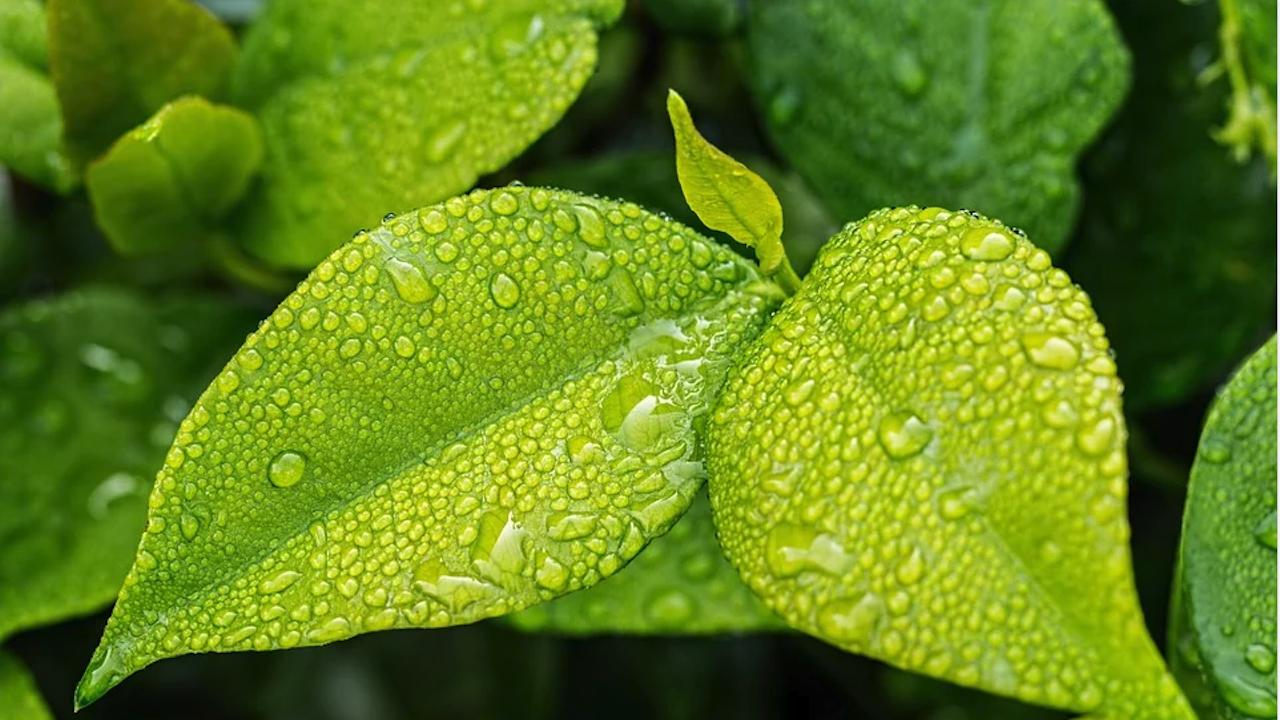 Изменя се Наредбата за реда за класифициране на растенията и веществата като наркотични