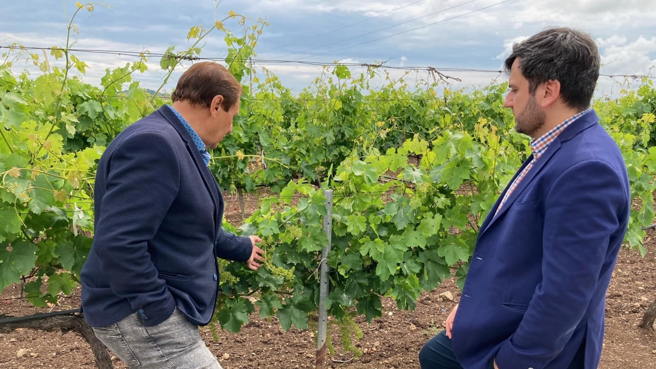 Заместник-министър Събев: Българското вино трябва да си върне присъствието на световните пазари