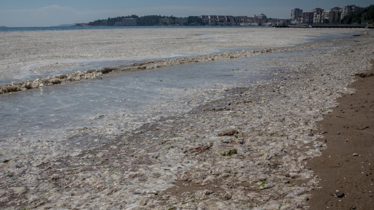 Морска слуз застрашава и турски егейски острови в разгара на сезона