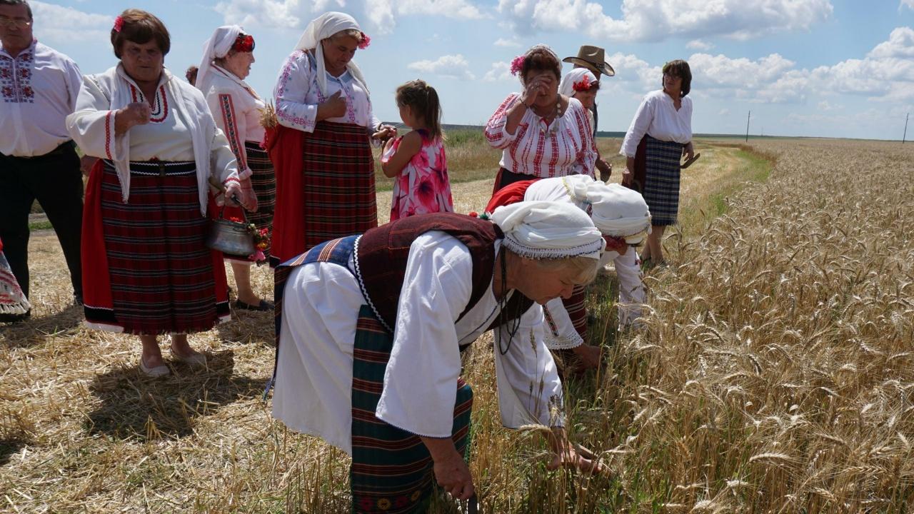 Фестивалът на Бялата жътва в Тервел ще върне времето с обичаи отпреди столетие