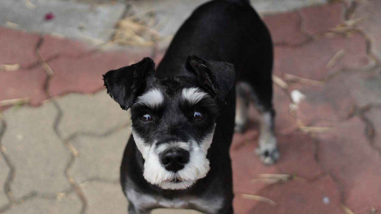 Изследователи посочиха кои са най-агресивните кучета