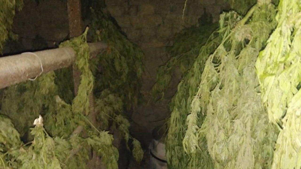 Удар от над 50 килограма марихуана в Свиленградско
