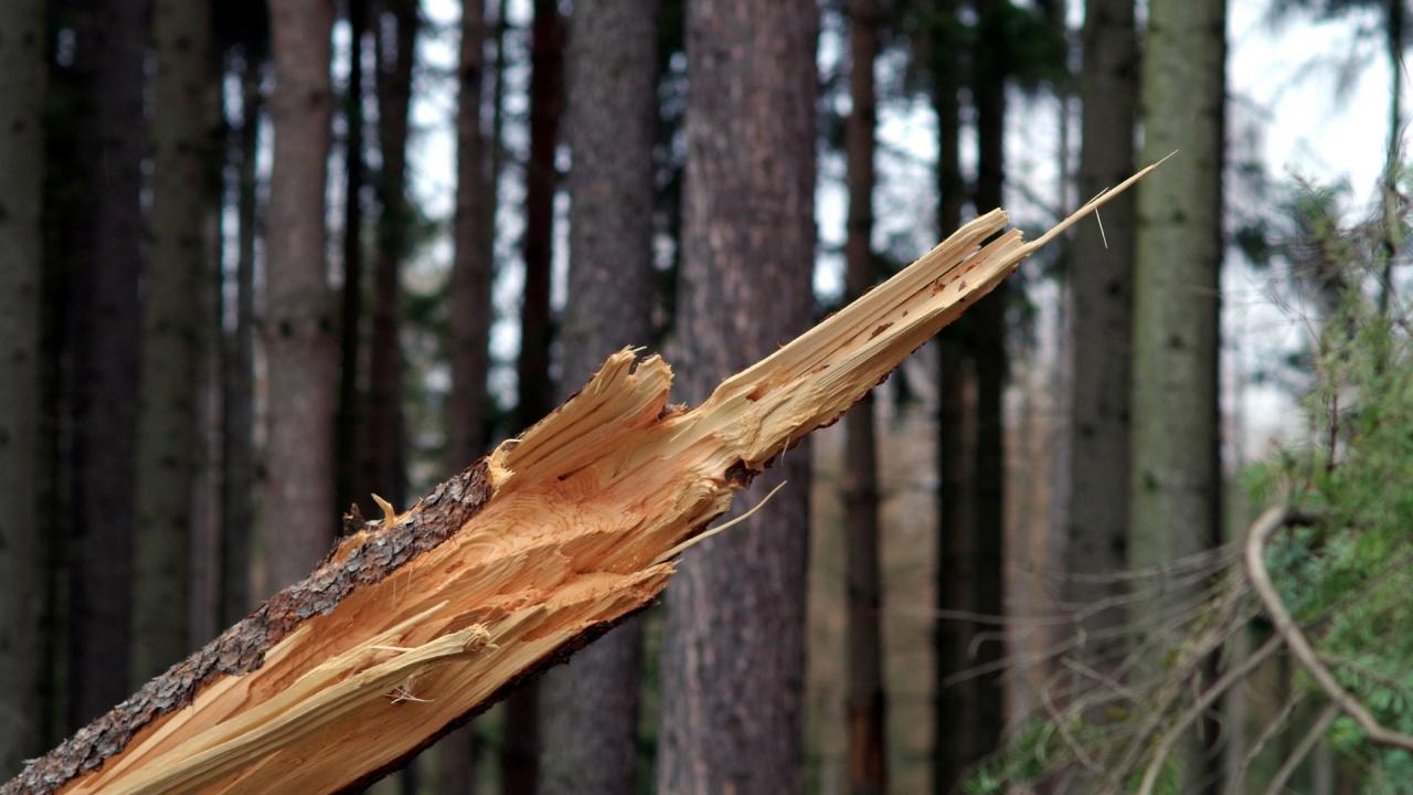 Клон от дърво се счупи по време на училищно тържество в Габрово, учителка е наранена