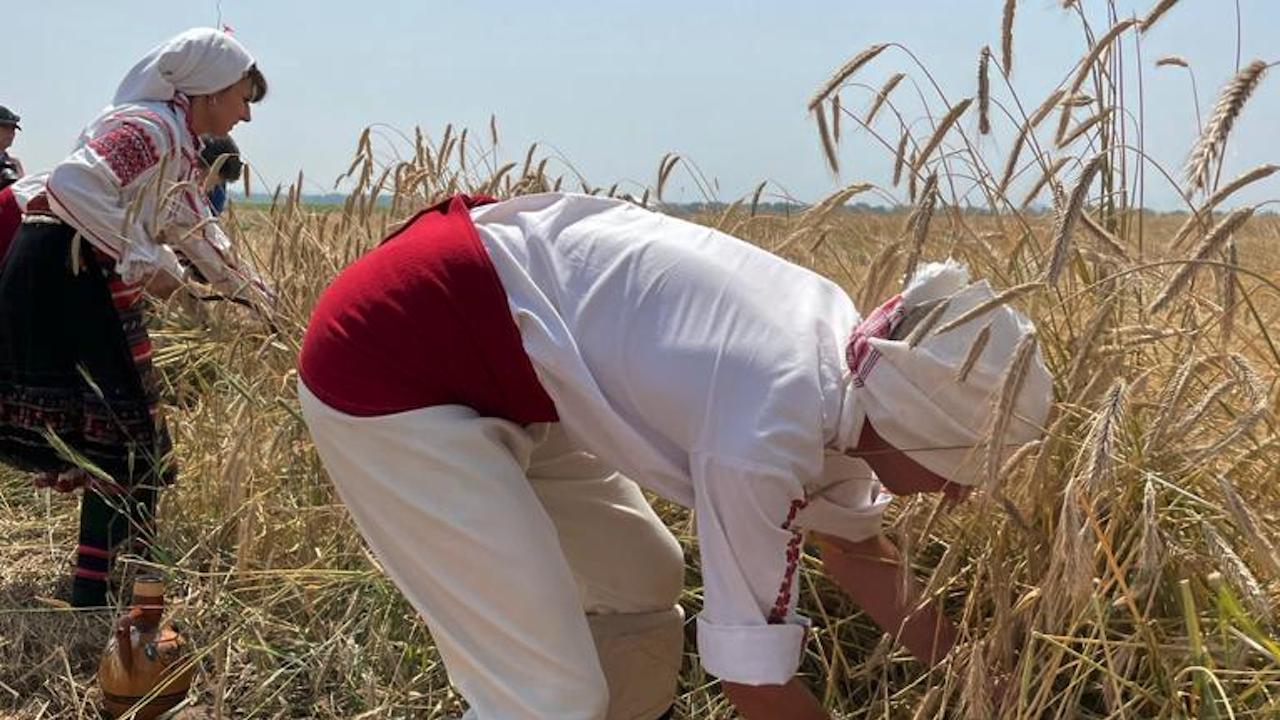 Бозуков: Очакваният добив от пшеница тази година ще бъде около 5.7-5.8 млн. тона