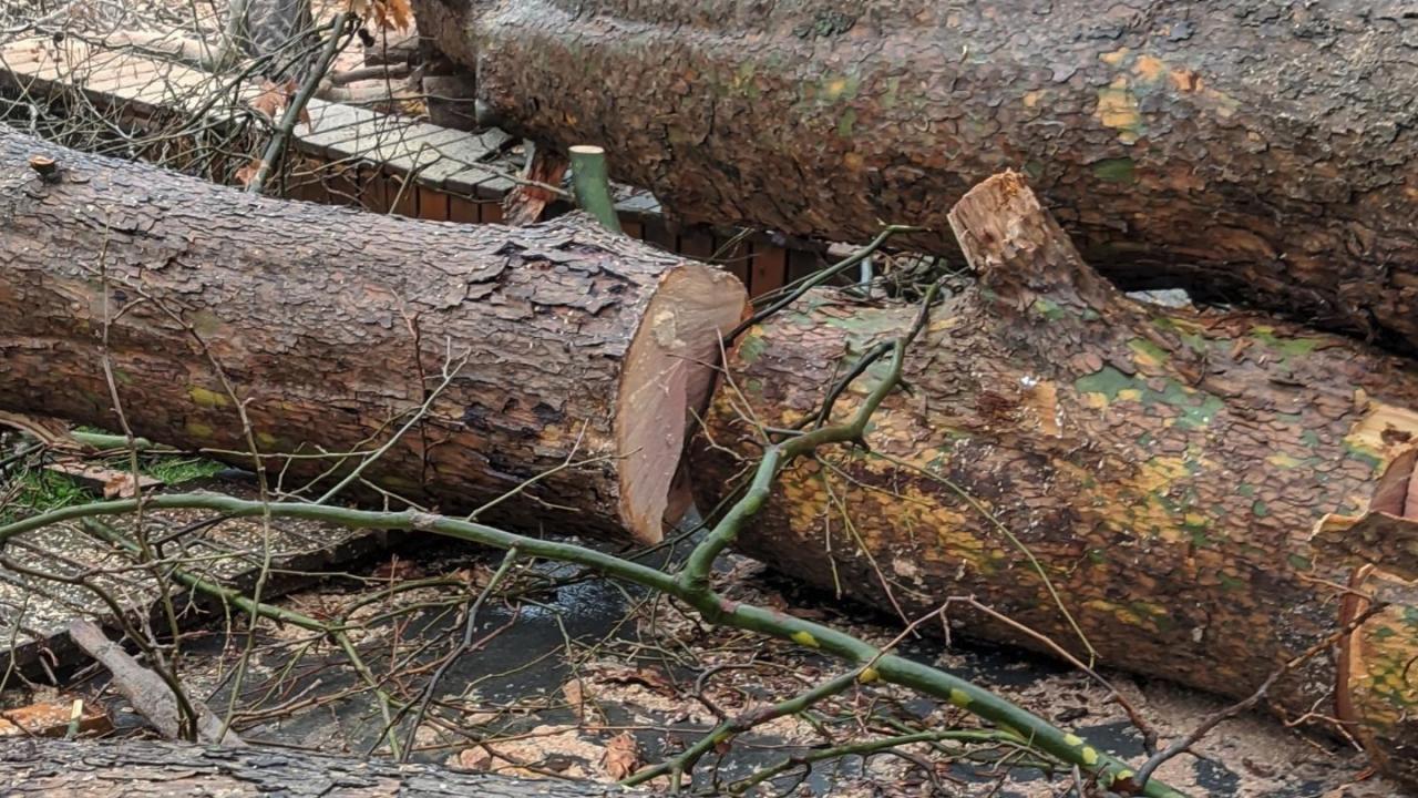 """Буря нанесе сериозни щети в Шумен и в природния парк """"Шуменско плато"""""""