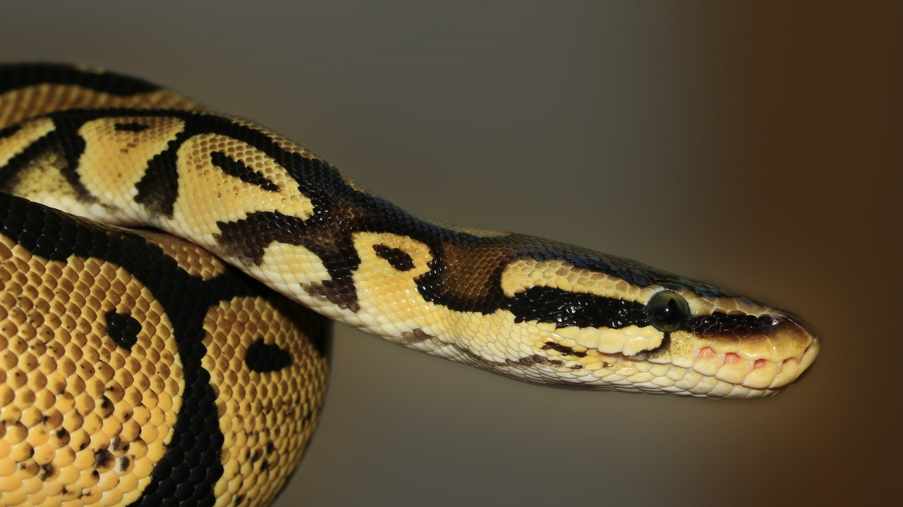 Как да реагираме, ако видим змия?