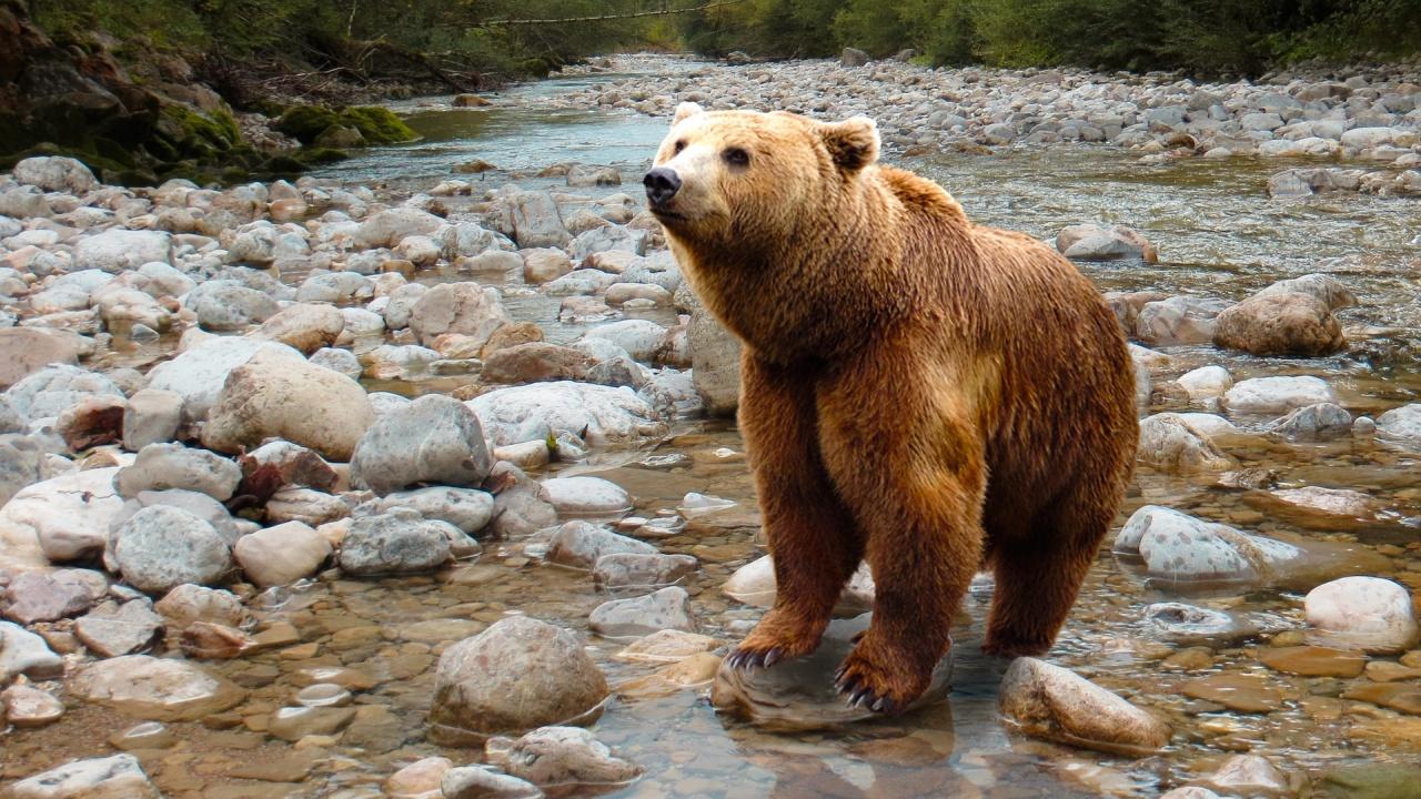 Ново 20: Отстрелват мечката, която нападна жена край Белица
