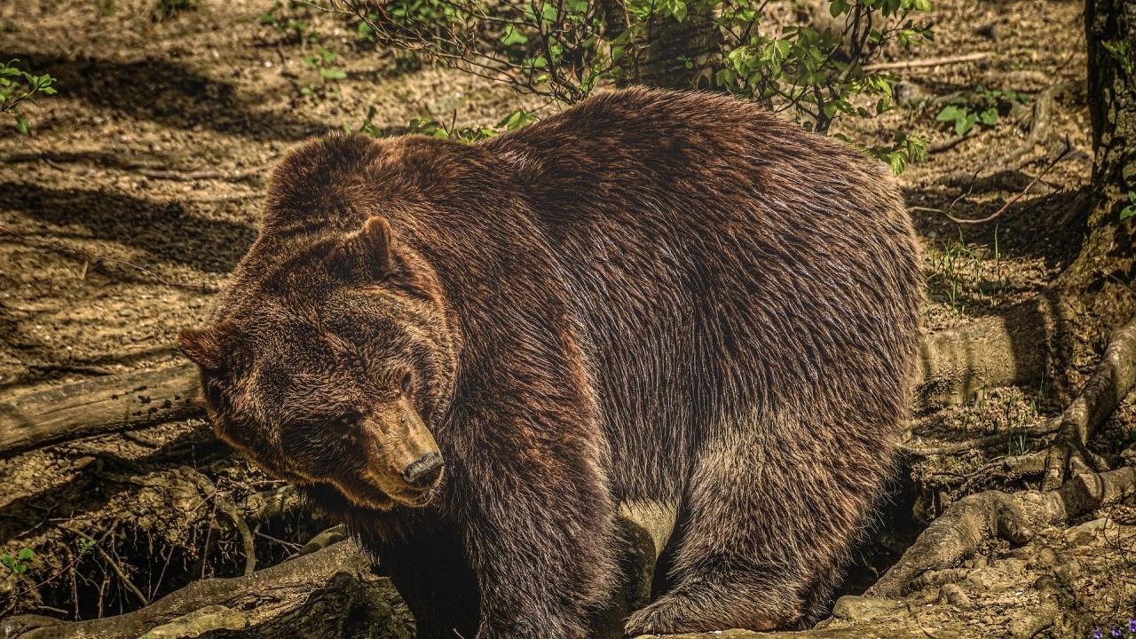 Експерт: Не може да се твърди, че човекът е нахълтал в дома на мечката