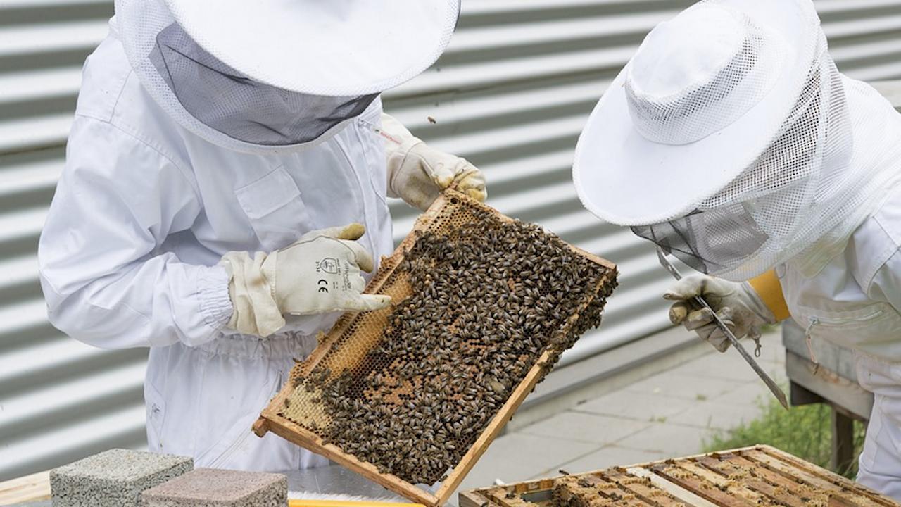 Финансовата подкрепа по de minimis за пчеларите е прекратена