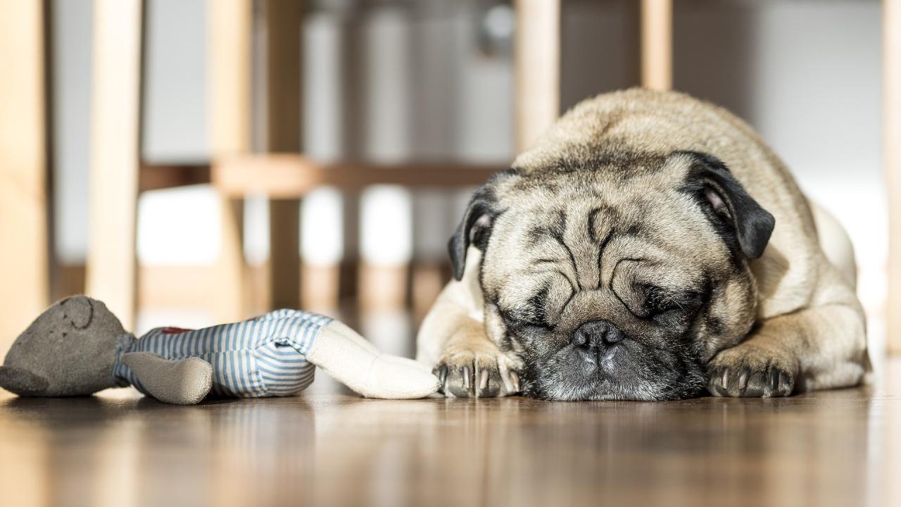 Кучета успяват да научат имената на любимите си играчки