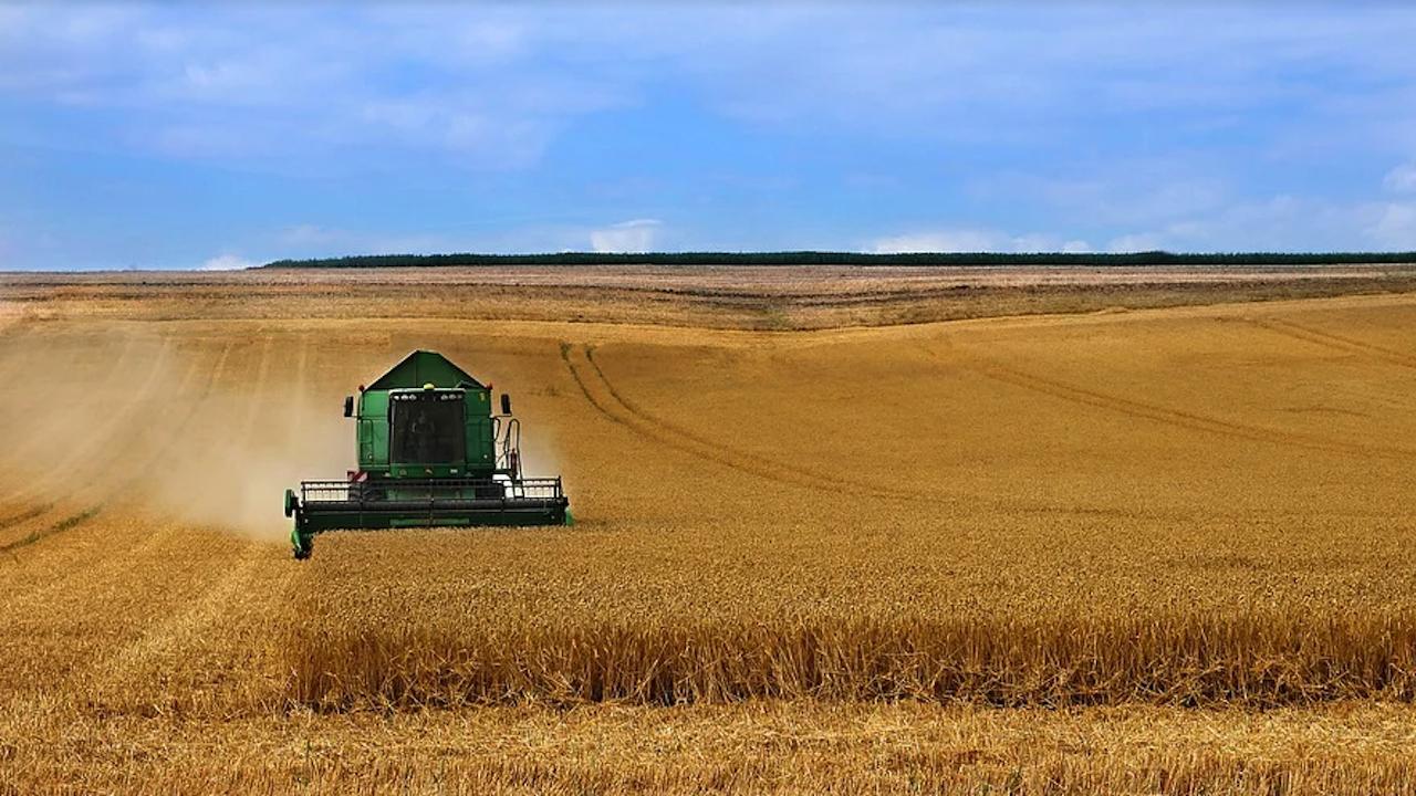 Ето какъв е средният добив от първите ожънати масиви с пшеница в Добричко