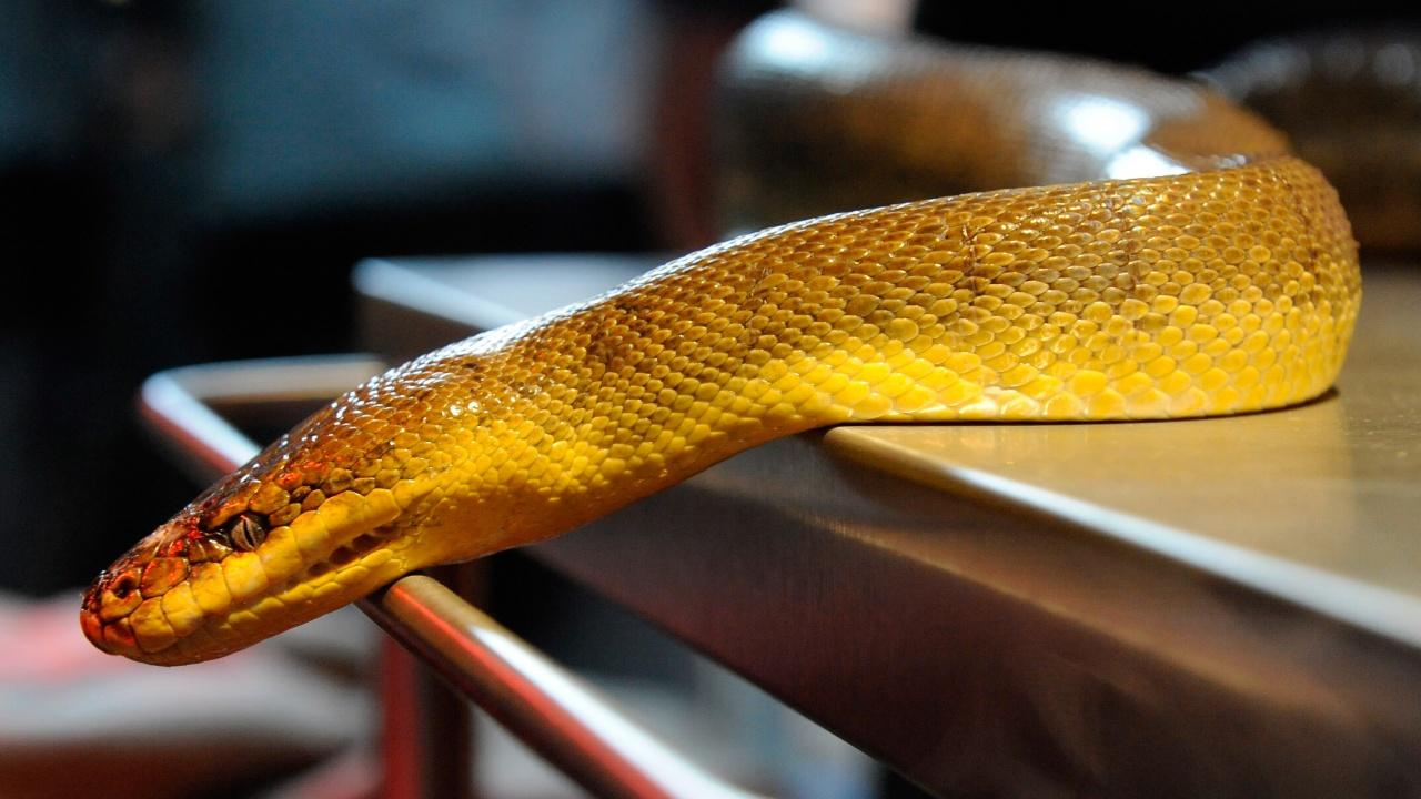 Огромна змия влезе в хранителен магазин в родопско село, три часа чакат помощ