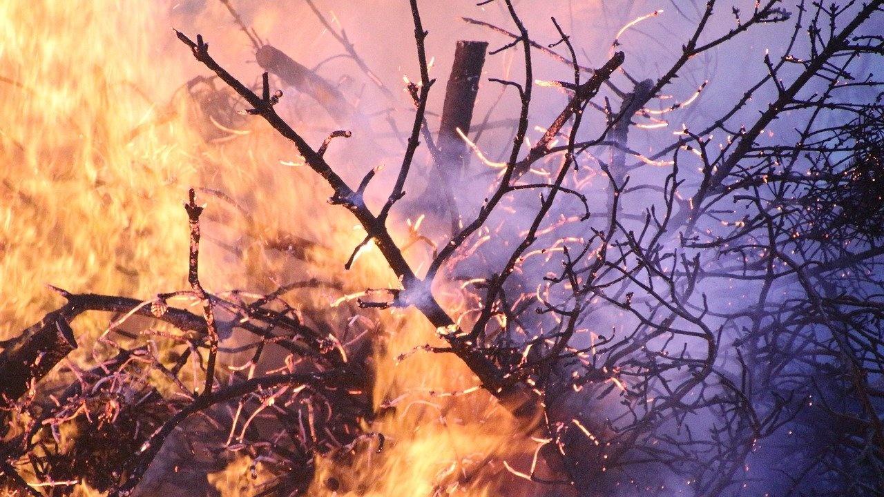 Гъст дим от бушуващи горски пожари покри руския град Якутск и още 50 селища в Сибир