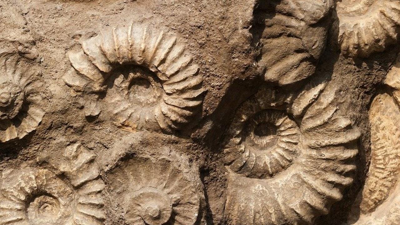 Откриха микрофосили на най-древните известни организми