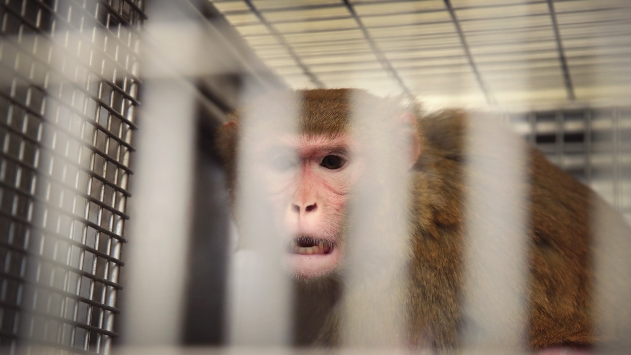 Първи починал от маймунски вирус в Китай