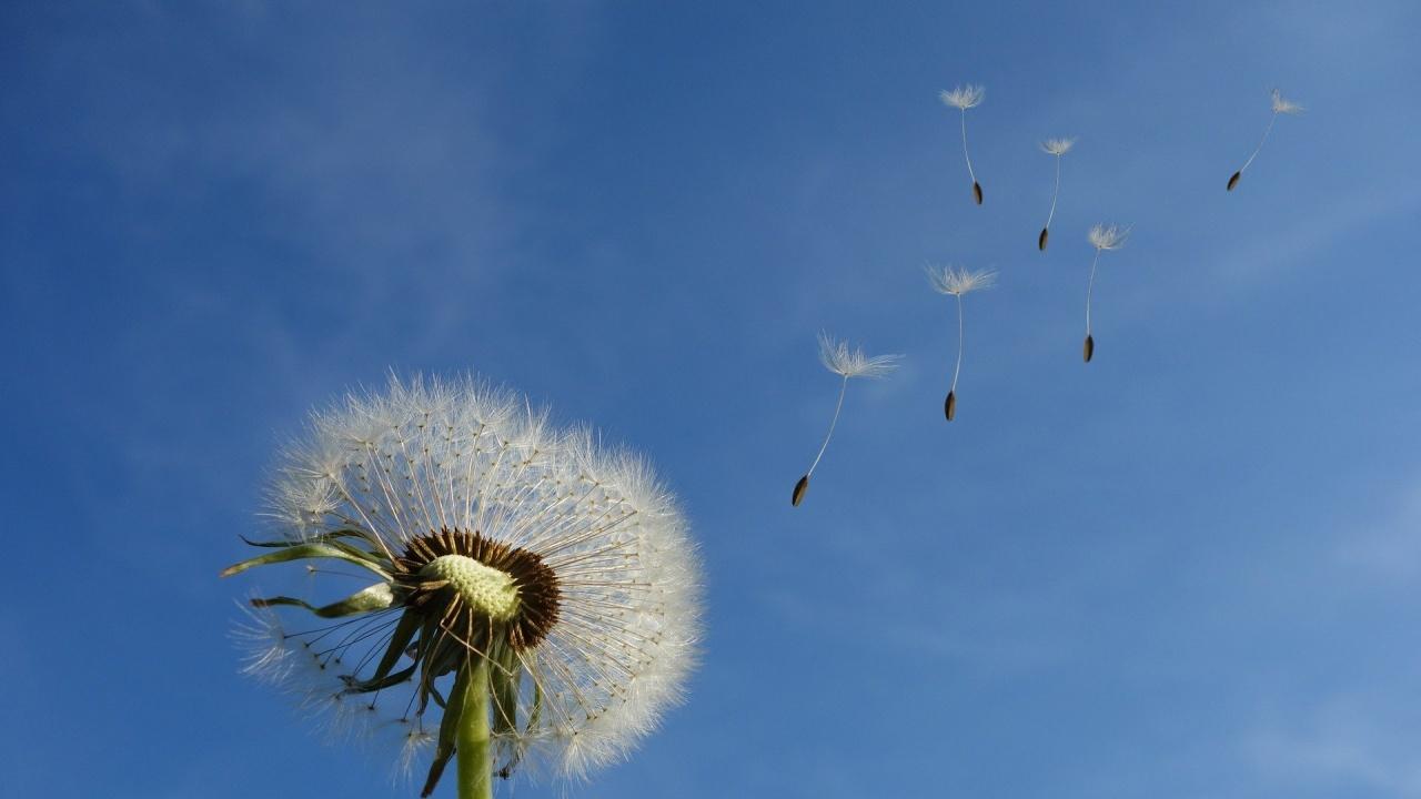 Жълт код за силен вятър за 11 области е обявен за утре