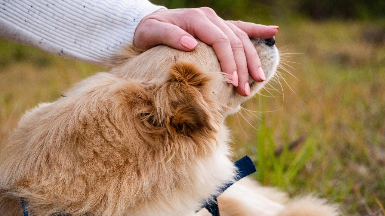 Предвижда се бюджетът за хуманно отношение към животните да бъде увеличен