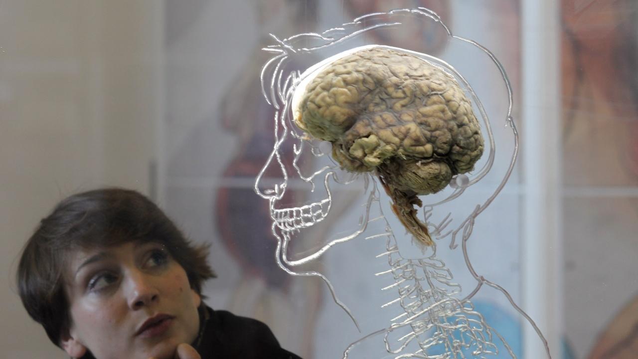 Учени откриха как новият коронавирус стига до мозъка