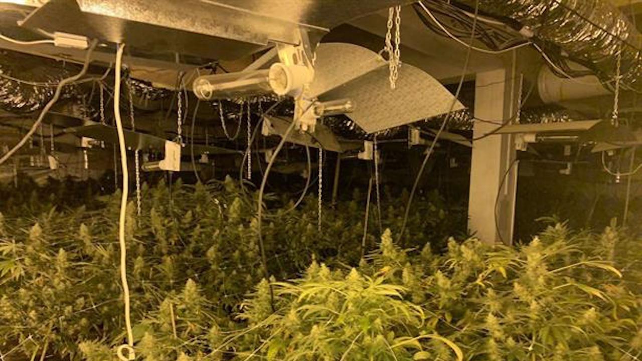 Оранжерия за марихуана бе открита в Бяла