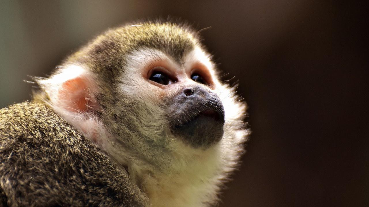 Зоопаркът в Бургас стана дом на пеликани и двойка маймуни