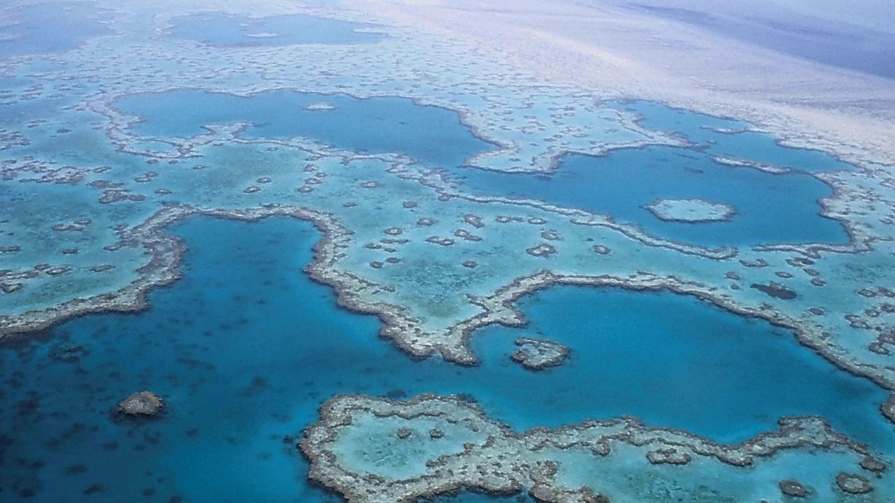 ЮНЕСКО реши да не включва Големия бариерен риф в списъка на застрашените обекти