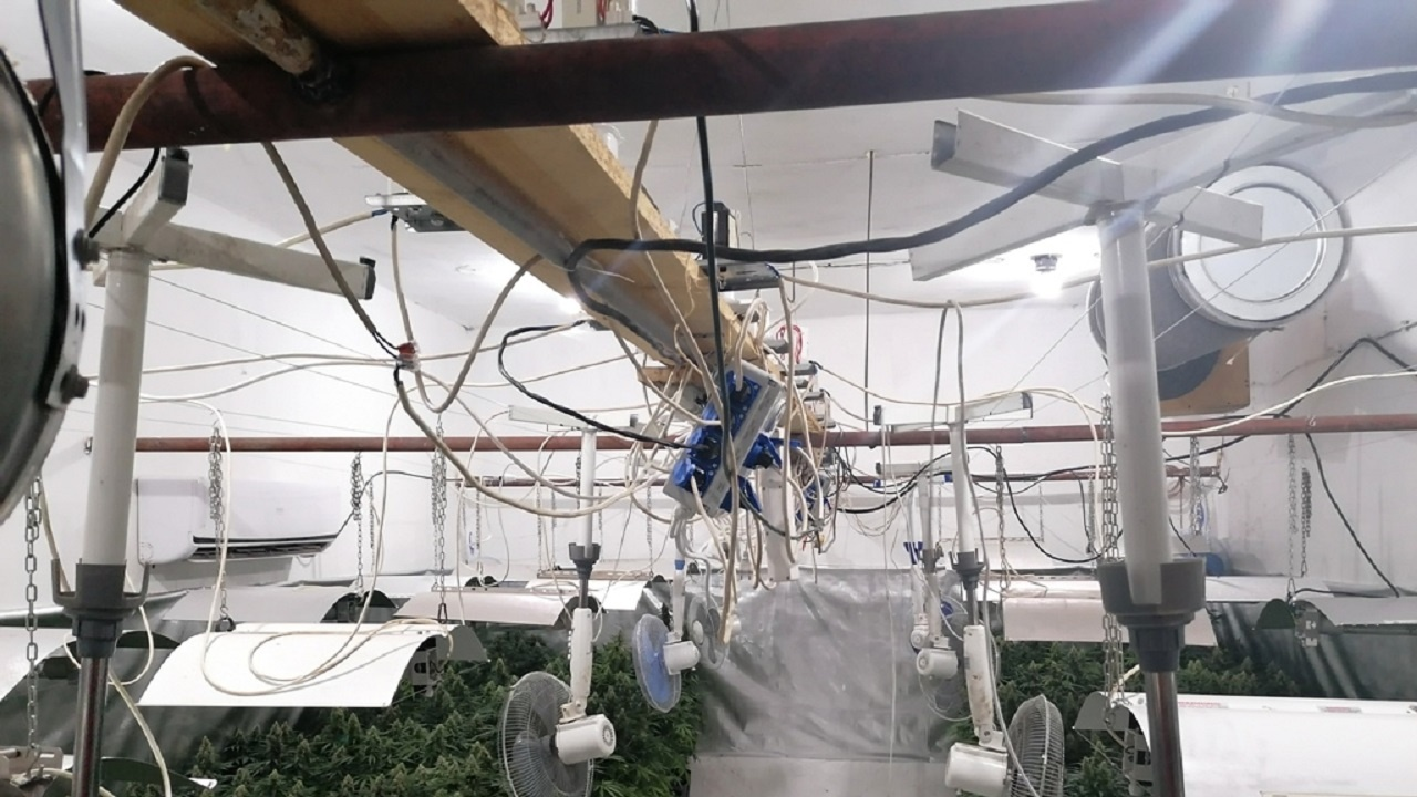 Разбиха модерна лаборатория за марихуана край Пазарджик